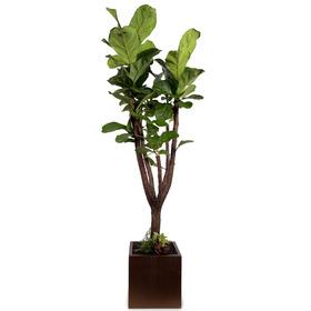 떡갈나무 사각분